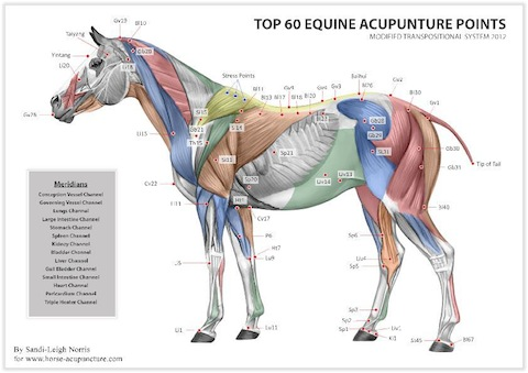Equine Acupuncture Points chart
