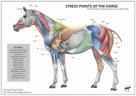 equine stress points chart